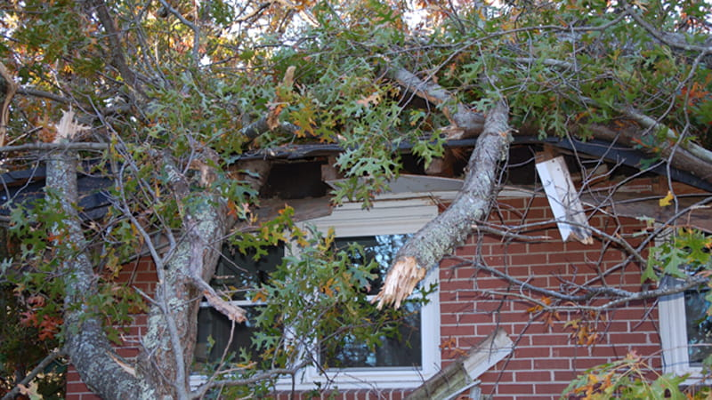 Ein Baum ist auf ein Dach vom Haus gestürzt